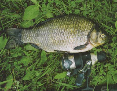 рыболовная каша для прикормки